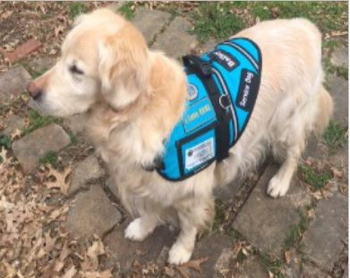Achievements Showcase Bailey Certified Good Citizen and Service Dog
