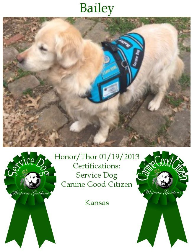 English Cream Golden High Achievers Therapy Dog Community - Wisteria Goldens Bailey Honor/Thor 01-19-2013 #honor011913