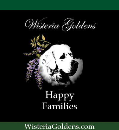 Wisteria Goldens happy families