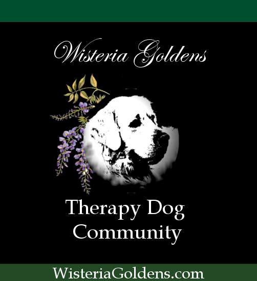 Therapy Dog Community - Wisteria Goldens