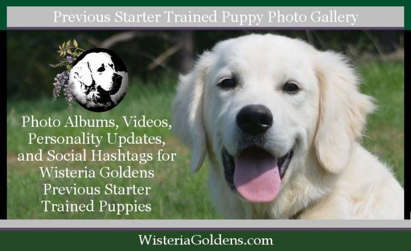 Previous Starter Trained Puppies Photo Gallery