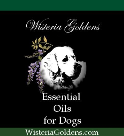 featured essential oils for dogs