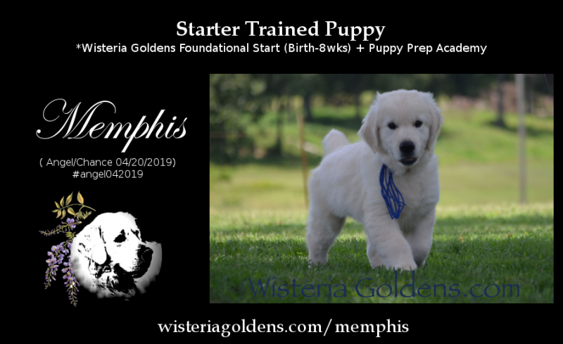 Available Starter Trained Puppy