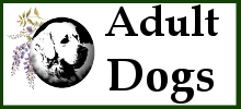 Available Adult Dogs for Adoption