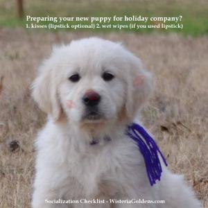 socialization checklist for puppy training wisteria goldens english cream golden retriever puppies