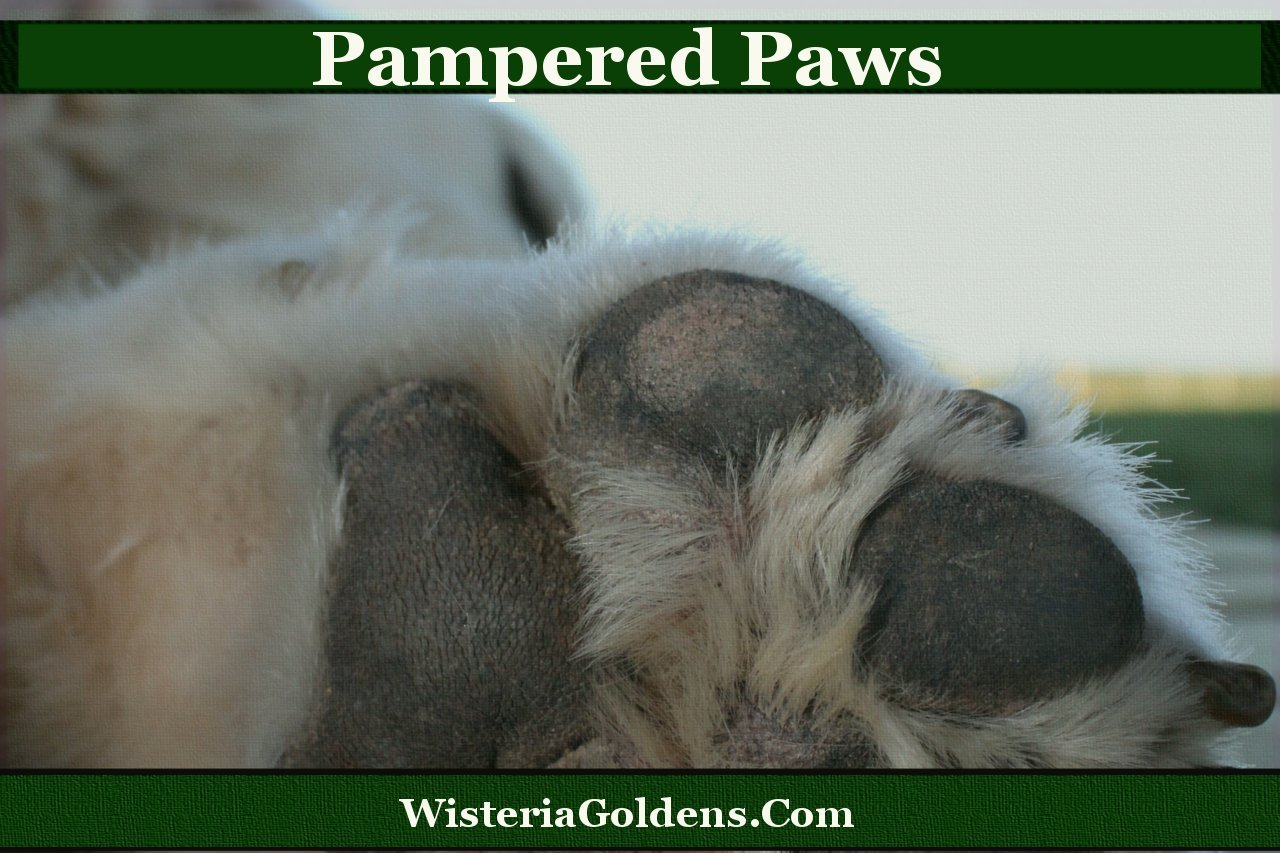 Pet Parents Guide to Pampered Paws