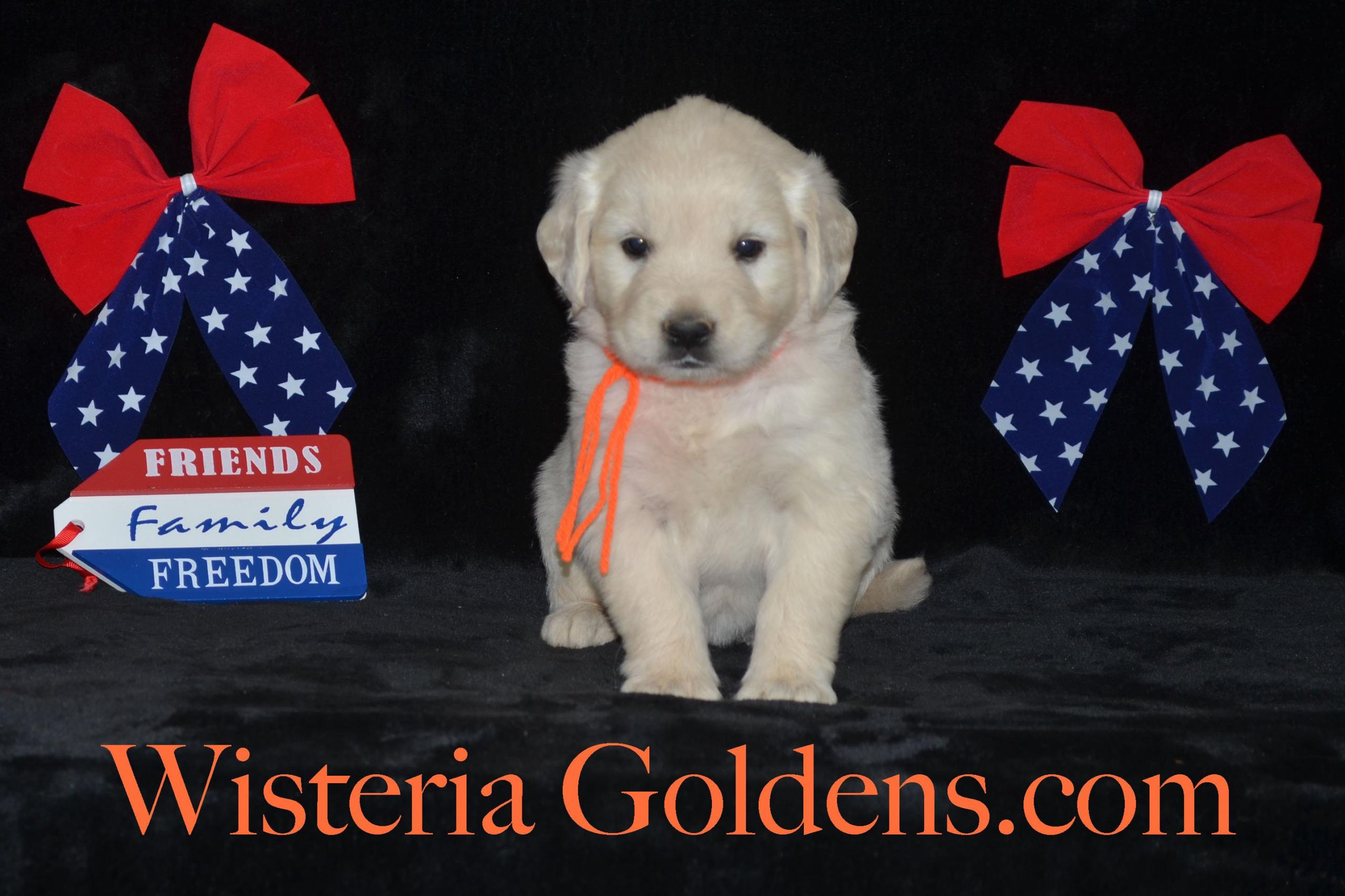 noise, fireworks, thunder, comforting your puppy or dog during loud noise situations