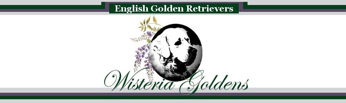 Wisteria Goldens Logo