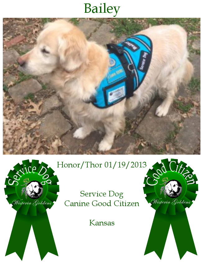 Therapy Dog Community - Wisteria Goldens Bailey Honor/Thor 01-19-2013 #honor011913