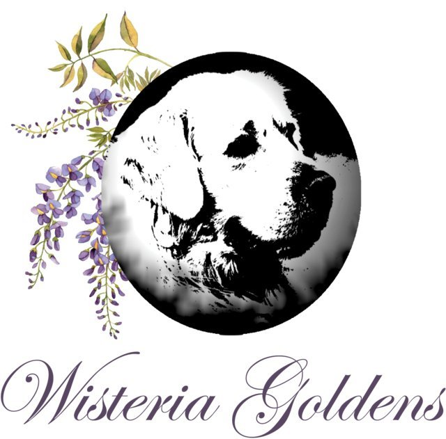 What is Wisteria Goldens Ranch Logo