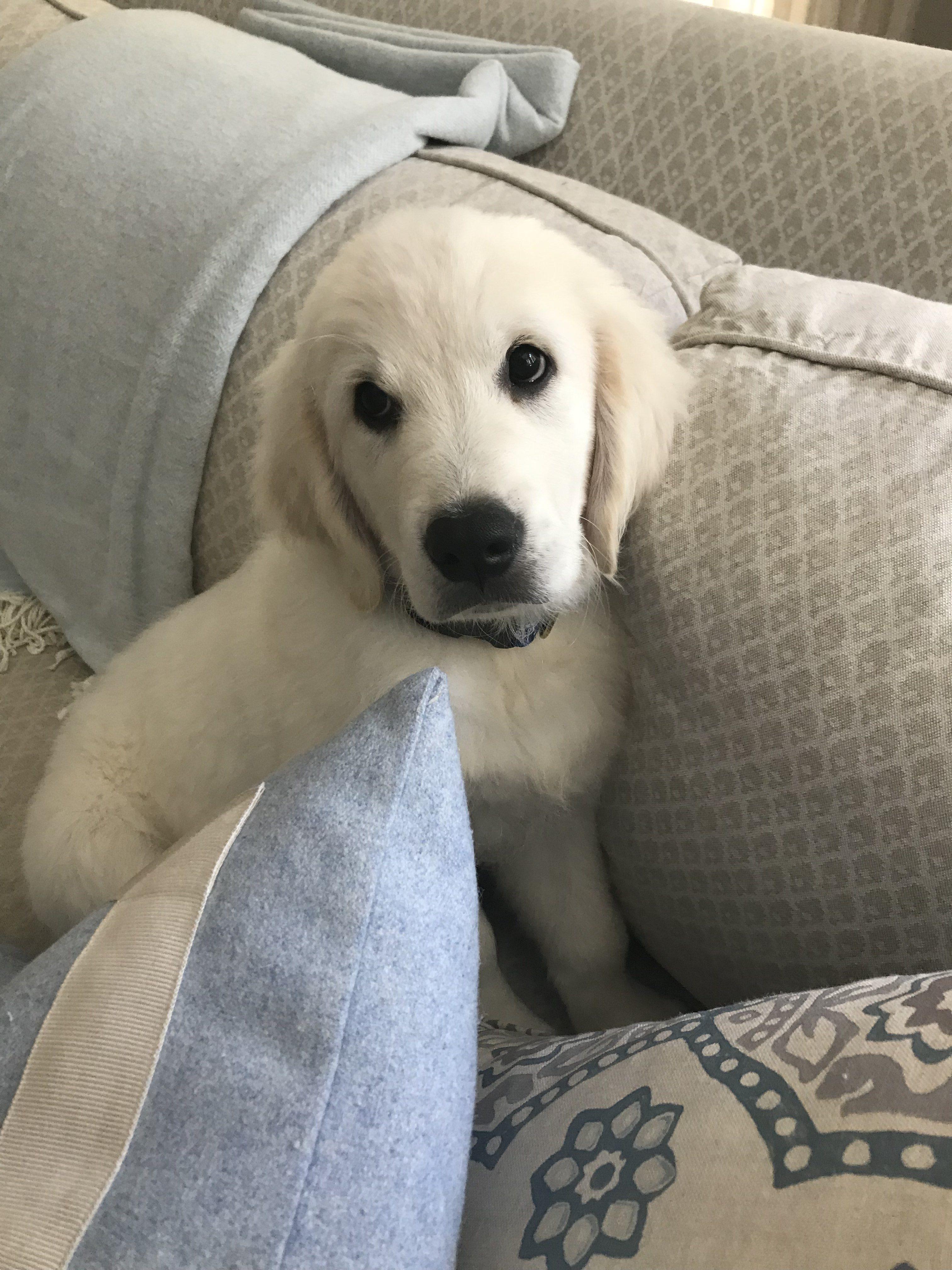 Duke (Sunny/Ego)