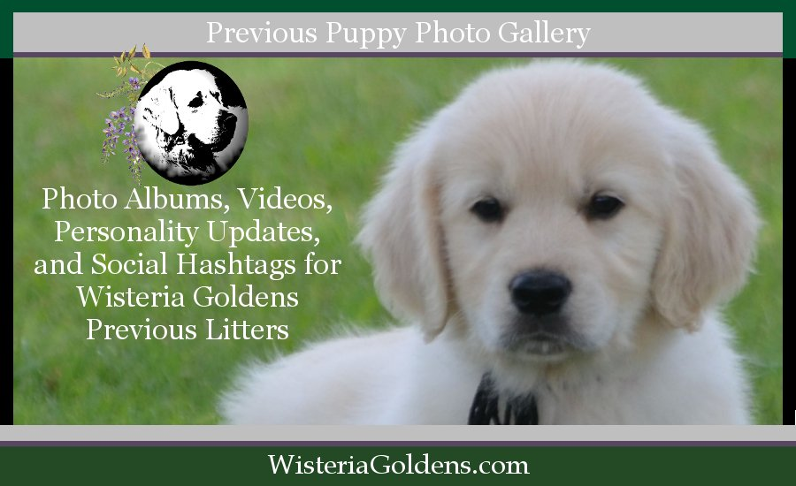 Previous Puppies Photo Gallery