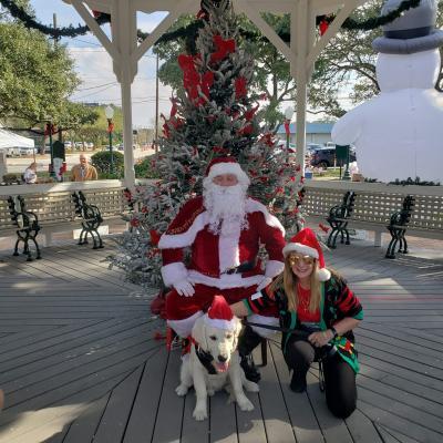 Harley Jazz/Ego Happy Family Update Wisteria Goldens English Cream Golden Retriever Puppy Update