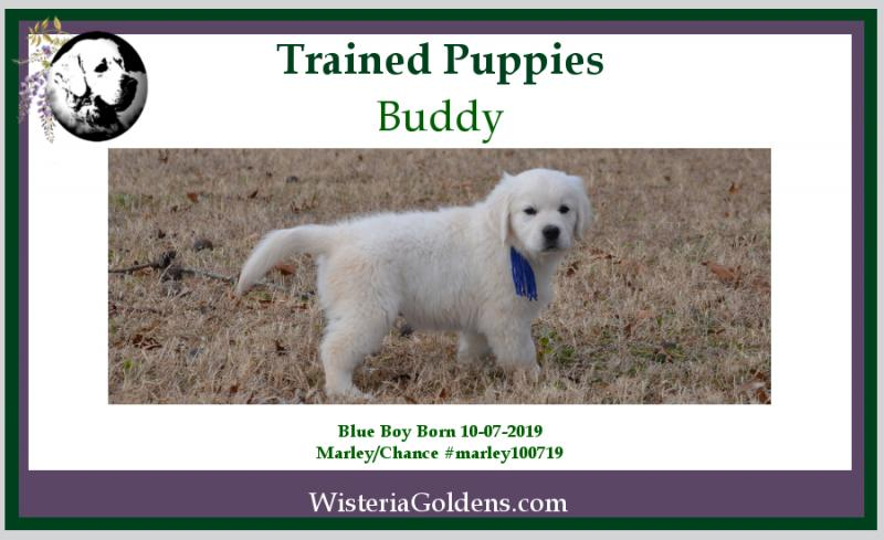 Available Trained Puppies