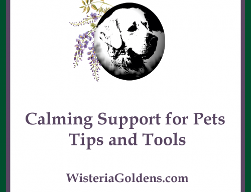 Calming Support for Pets l Tips and Tools