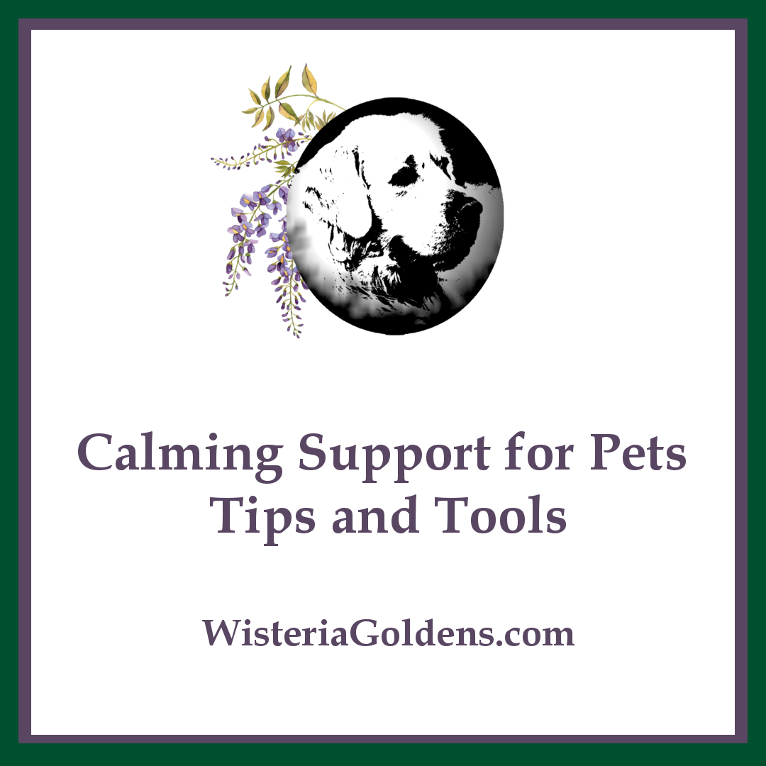 Calming Support for Pets : Tips and Tools