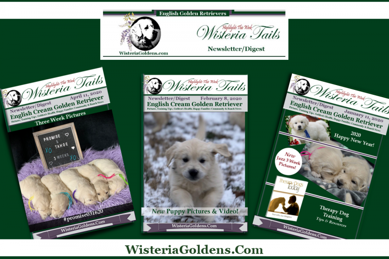 Newsletter Sampler Wisteria Tails Subscribe Invitation Banner