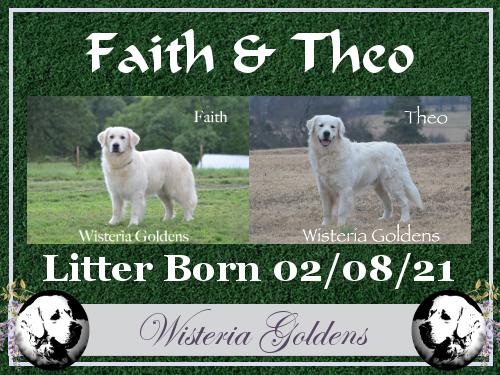 Faith and Theo Litter Born 02-08-2021