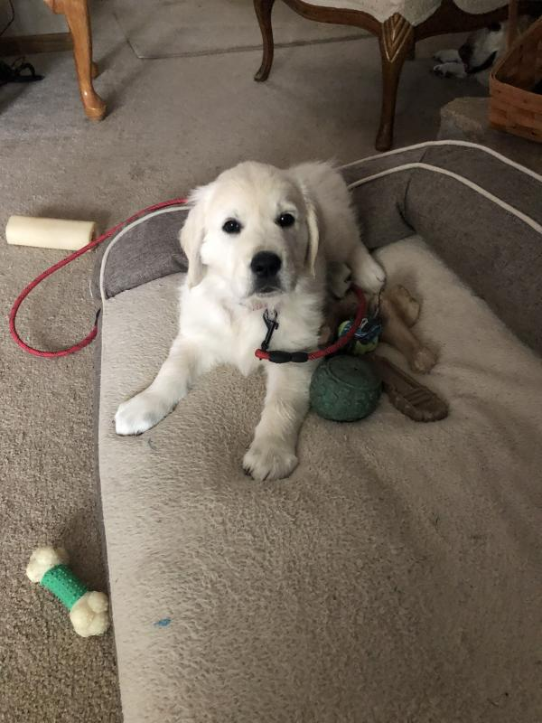Colby (Trinity/Rocky) Puppy Update