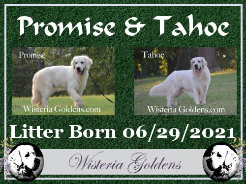 Promise Litter Born 06-29-2021