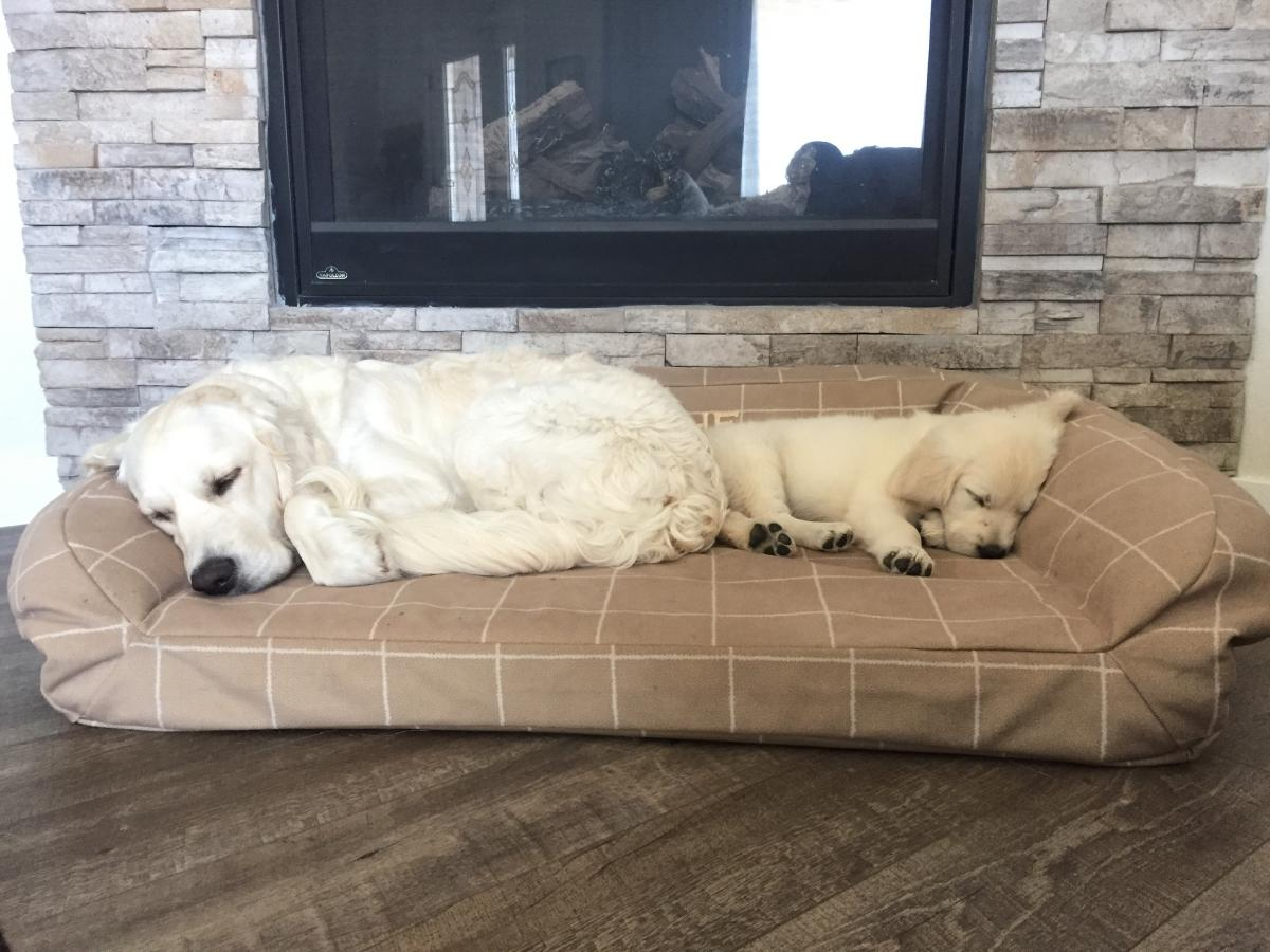 Blanche (Promise/Tahoe 3.16.20) and Denali (Promise/Tahoe 6.29.21)