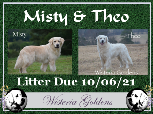 Upcoming Litters Misty/Theo