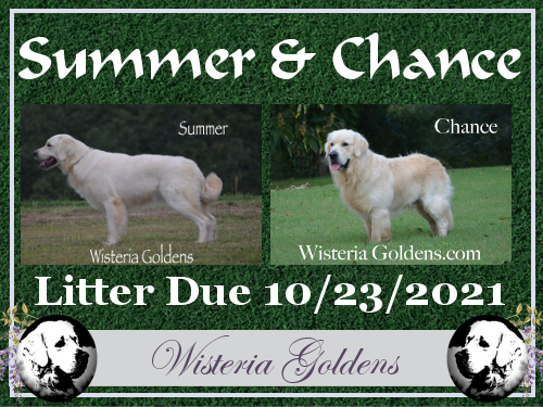 upcoming litters Summer and Chance