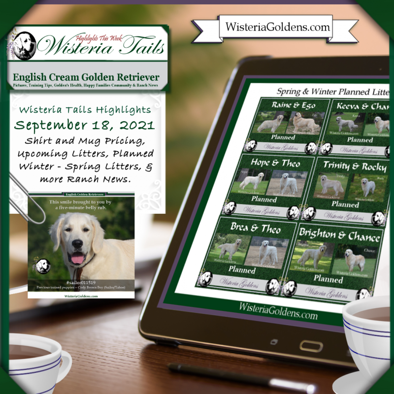 Newsletter Wisteria Goldens I Wisteria Tails Highlights September 18, 2021