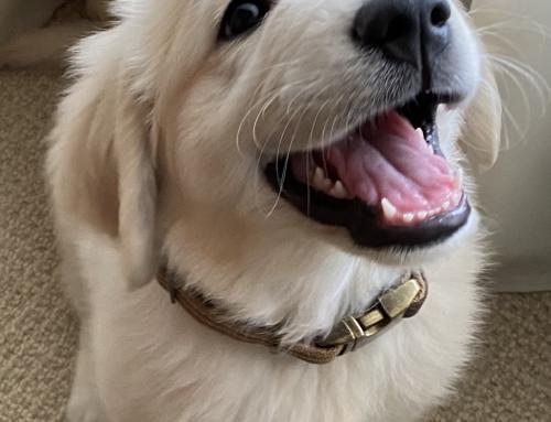 Zeus (Harper/Chance)